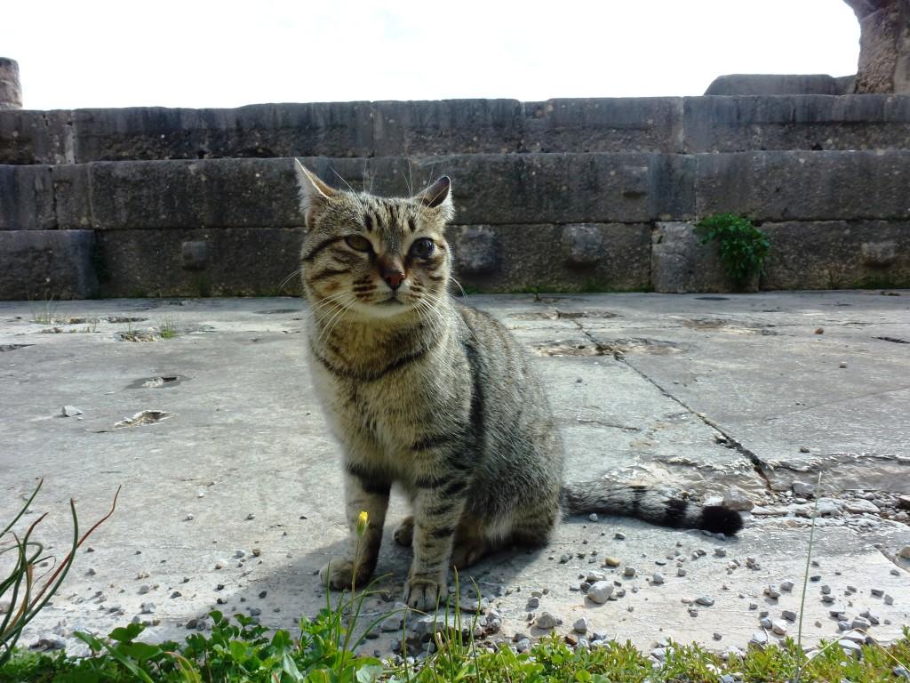 Katt i Delfi